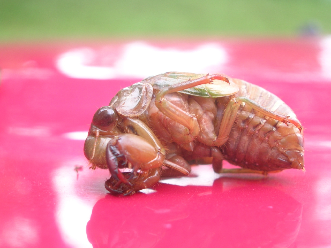 crazy insect 2